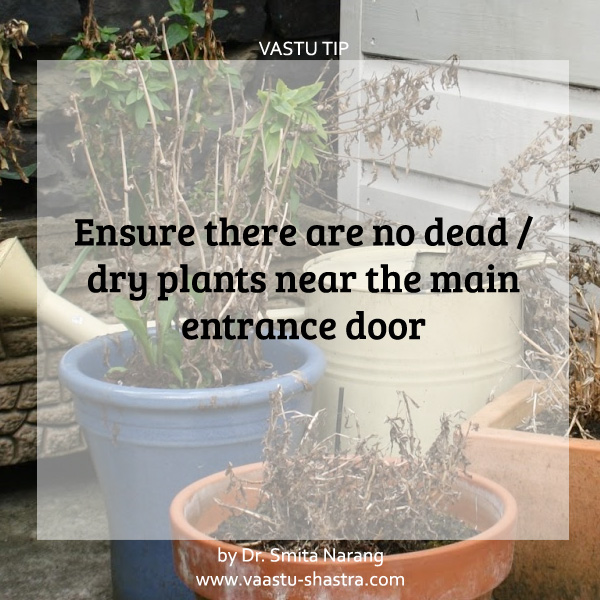 Ensure there are no dead/dry plants near the main entrance door. - Vastu Tip